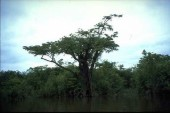 Tefe habitat