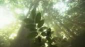 gozd iz vode