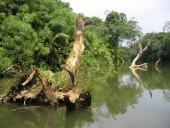 Poplavljeno