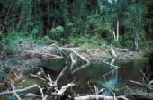 Diskus habitat