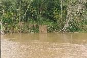 fish trap on edge of Amazon780