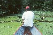 Amazon lilies746