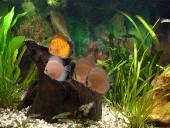akvarij-leon1