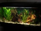 akvarij-leon4