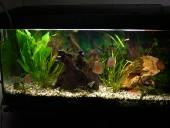 akvarij-leon5