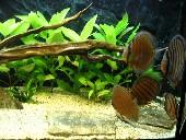 akvarij 006