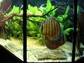akvarij 007