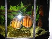 akvarij 008