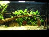 akvarij 010