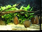 akvarij 011