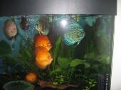 akvarij06 002