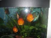 akvarij06 003