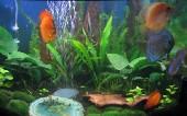 akvarij06 005