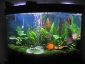 akvarij06 007