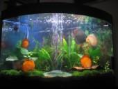akvarij06 016