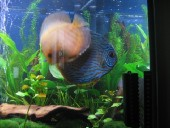 akvarij06 032