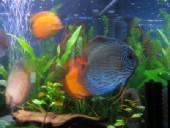 akvarij06 033