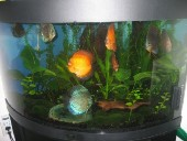 akvarij06 035