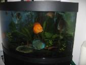 akvarij06 045
