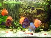 Akvarij2