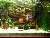 Akvarijsko ozadje